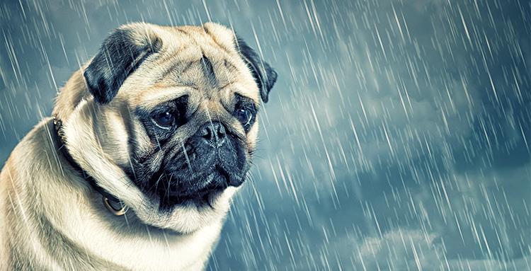 6 knygos, kurias verta perskaityti norint išvengti rudeninės depresijos